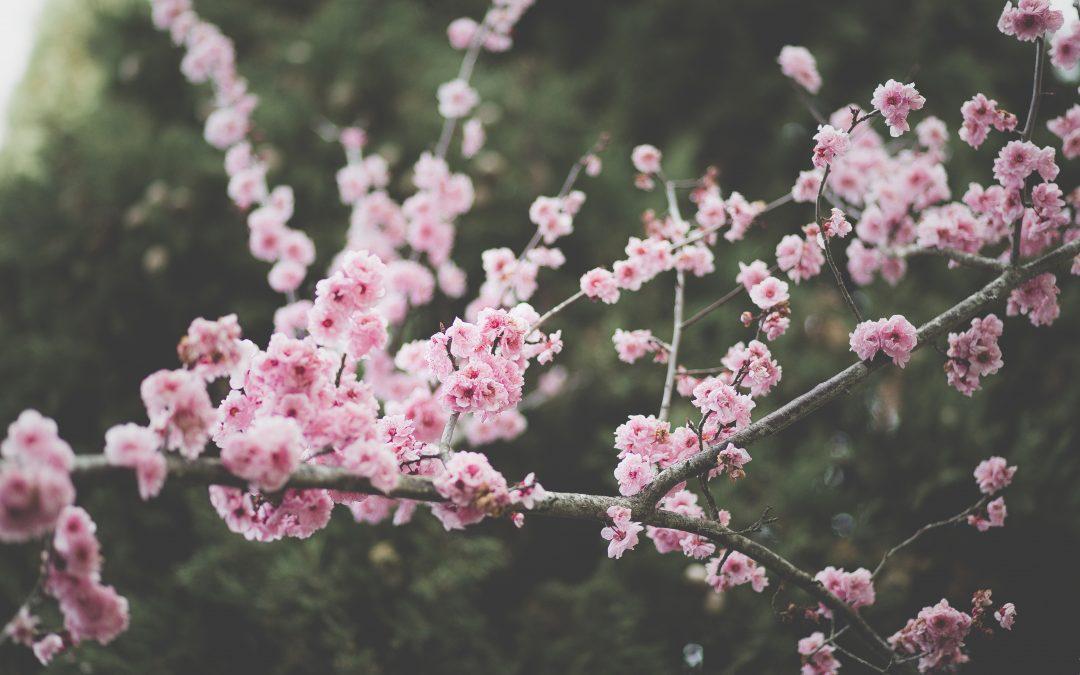 Zajęcia kreatywne – wiosennie!