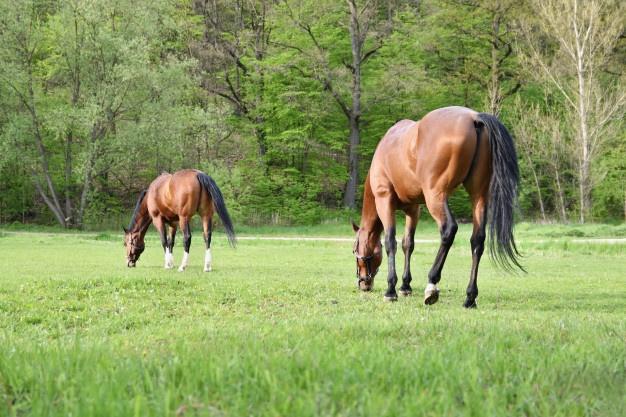 Kierunek –> Stadnina koni